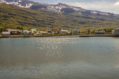 Seydisfjordur village and fjord - Iceland. — Stock Photo