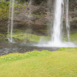 Big beauty Seljalandsfoss waterfall - Iceland. — Stock Photo #20041401