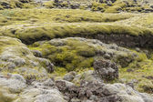 Mossy lava field - Iceland. — Stock Photo