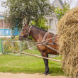Stock Photo: One horse transportation hay on wooden cart - Ukraine.