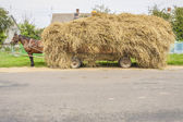 One brown horse transportation hay on wooden cart - Ukraine. — Stock Photo