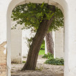Stock Photo: Abandon white building with tree inside - Alexandripark, Bila