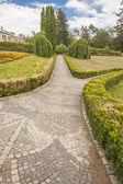 Pattern hedge in Sofiyivsky park - Uman, Ukraine, Europe. — Stock Photo