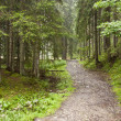 Stock Photo: Black mountain path - Tatrmountains, Poland.