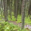 Stock Photo: Empty mountain path - Tatra, Poland.