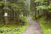 Black mountain path - Tatra mountains, Poland. — Stock Photo