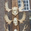 Antlers of reindeers on street market - Schokland, Holland. — Stock Photo