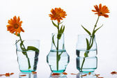 Three vase on white background. — Stock Photo