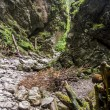 Ravine Cracow - Tatra National Park, Poland. — Stock Photo