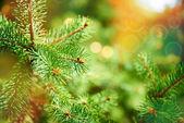 小ぎれいなな枝の背景 — ストック写真