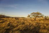 Desert Plain — Stock Photo