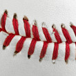 Stock Photo: Macro of Baseball Seams