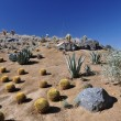 Hillside cactus — Stock Photo