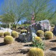 Garden in the desert - Stock Photo