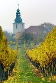 Church in autumnal vineyard — Stockfoto