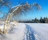 Wintry evening view cross country skiing way with ribbon tree — Stock Photo