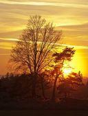 Zonsondergang met bomen — Stockfoto