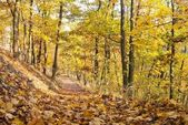 Autumnal view of deciduous forest and forest way — Stock Photo