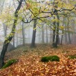 Autumnal view of deciduous wood — Stock Photo