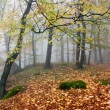 Autumnal view of deciduous wood — Stockfoto #20504329