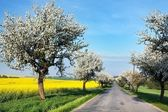 Spring view of road with alley of apple ree and rapeseed field — Stock Photo