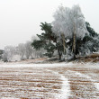 Stock Photo: Wintery view of ice covered field with rural road and wood