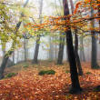 Autumnal view of deciduous wood — Stockfoto #20582267