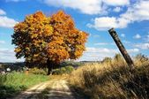 Autumnal view of colored tree and rural road — Stock Photo