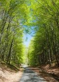 Springy view of forest road and green forest — Stock Photo