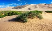 Desert - mongolia — Stock Photo