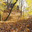 Stock Photo: Autumnal view of deciduous forest and forest way with ruin wall