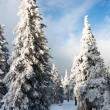 Beautiful wintry view of snowy wood on mountains — Stock Photo #22754575