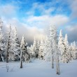 Beautiful wintry view of snowy wood on mountains  — Stock Photo #22754589