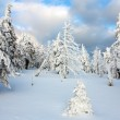 Beautiful wintry view of snowy wood on mountains — Stock Photo #22754595