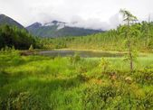 Tajga in sayan mountains - buryatia - russia — Stock Photo
