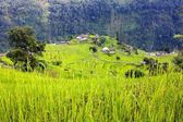 Rice field and village in Annapurna nountains - Nepal — Stock Photo