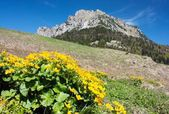 Mount Rozsutec with marigold - Mala Fatra mountains - Slovakia — Stock Photo