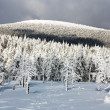 Stock Photo: Wintry view of snowy forest on mountain