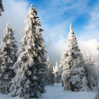 Stock Photo: Beautiful wintry view of snowy wood on mountains