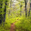 Stock Photo: Springy view from europebeech wood with pathway