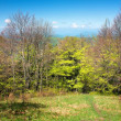 Stock Photo: Beautiful springtime on carpathimountains
