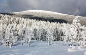 Wintry view of snowy forest on mountain — Stock Photo