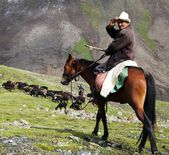 10th of October 2013 - stockrider with flock in Alay mountains on pastureland - life in Kyrgyzstan — Stockfoto