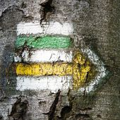 Green, yellow and white hiking trail signs symbols in springtime on tree — 图库照片