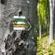 Stock Photo: Green, yellow and white hiking trail signs symbols in springtime on tree