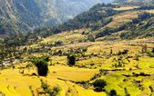 Rice fields and village in Nepal — Stock Photo