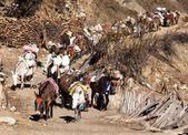 Caravan of mules with goods - Western Nepal — Stock Photo