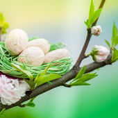 Cherry tree with green nest and eggs — Stock Photo