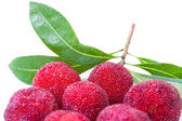 Pile of waxberry or bayberry — Stock Photo