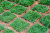 Fresh Green Grass tiles — Foto Stock